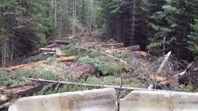 Forest Service Demolishes Access To Private Property