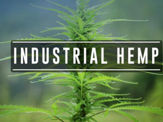 Beneficial Uses of Industrial Hemp - Rep. Christy Zito