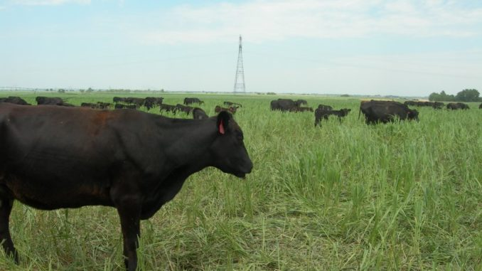 Emergency Grazing Authorized in Montana & Dakotas