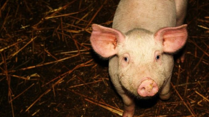 Animal Rights Groups Want To End Livestock Production