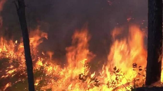 Idaho Sends Bill To Family for White Bird WildFire