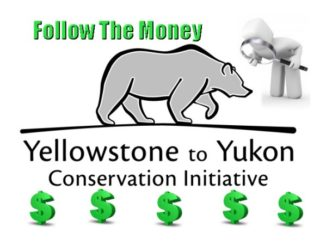 Who Is Y2Y? The Truth of Yellowstone to Yukon