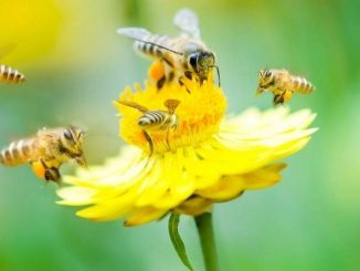 Government Expands To Control Apiaries In Montana