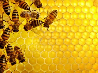 Montana Legislature Attacks Hobby Bee Keepers