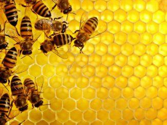 Montana Legislature Attacks Hobby Bee Keepers