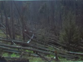 Timber Industry And Local Government