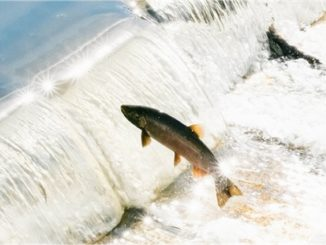 Dam Removal Is Harmful To Salmon & State Economies