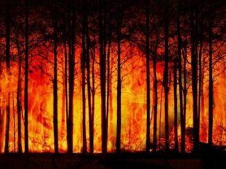 Megafires Become Political